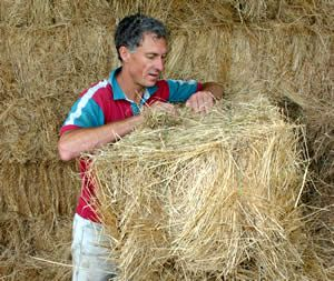 Horse hay: how to identify the good stuff - Horsetalk - Horse nutrition and feeding articles and information