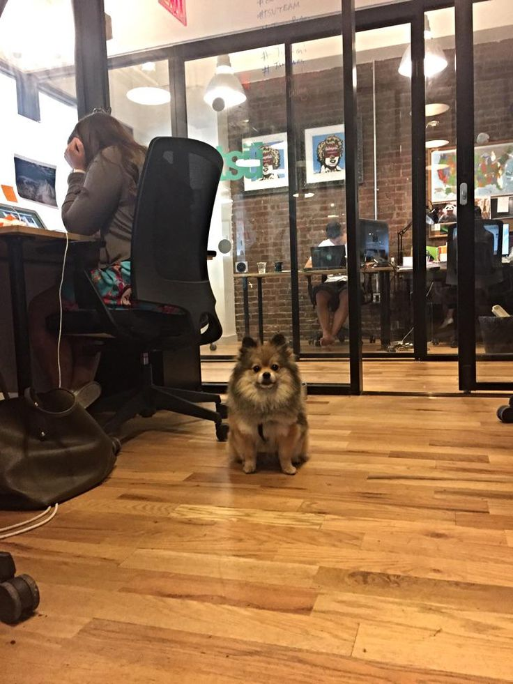 Never a dull moment at WeWork West Broadway. #dogsofWeWork