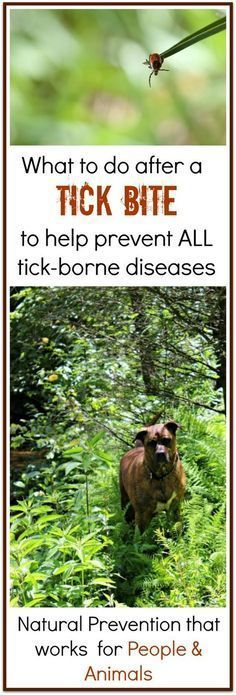This is one natural remedy that you need for a tick bite to help prevent all tick borne diseases including Lyme and Rocky Mountain Spotted fever. Works for people and animals. I always take this with me when I go camping just in case.