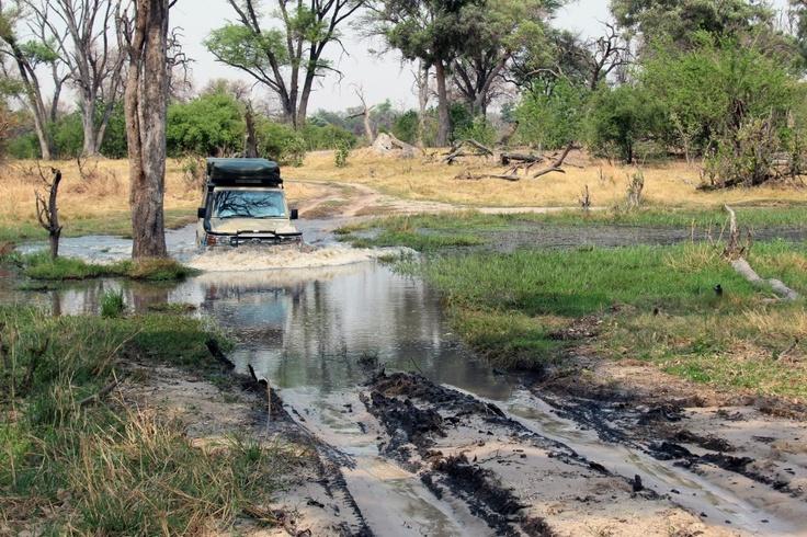 Water crossing Moremi