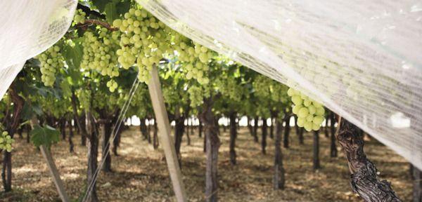 LISO Fruit farm by Marina Cito, via Behance