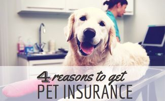 Cost of Pet Insurance
