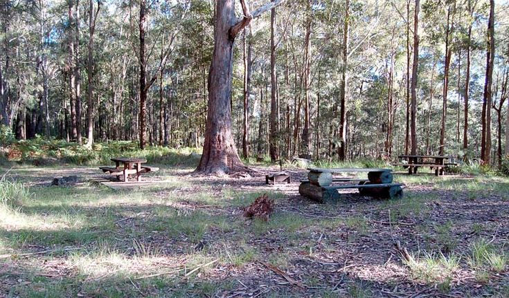 Log tables, Watagans National Park