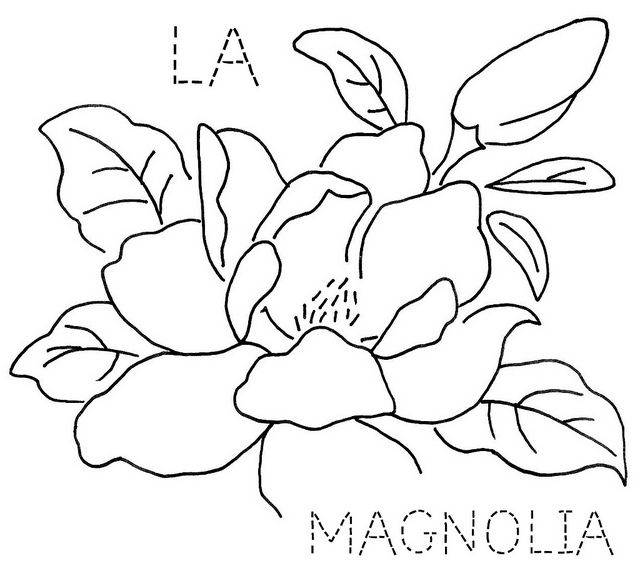 17 best ideas about magnolia flower on pinterest