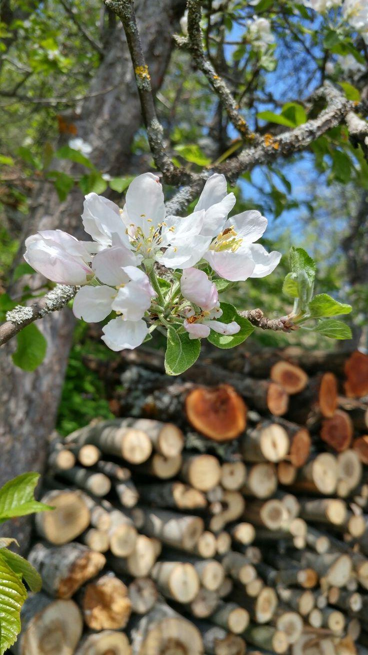 TURKEY-Karabük 🌸Beyaz çiçekler saf ve masum aşkı anlatır.Aynı benim gibi..🌸