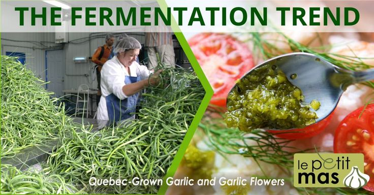 The fermentation trend, discover fermented garlic scapes!