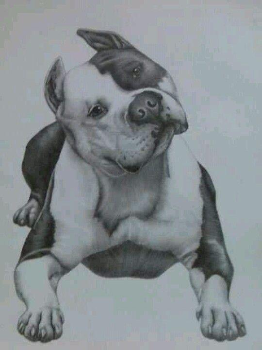 Pitbull drawing incredible