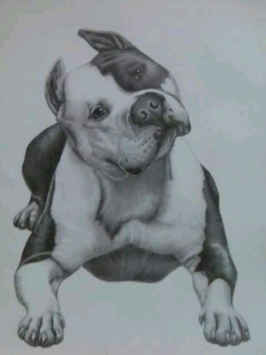 Pitbull drawing incredible | Pitbulls & Elephants ...