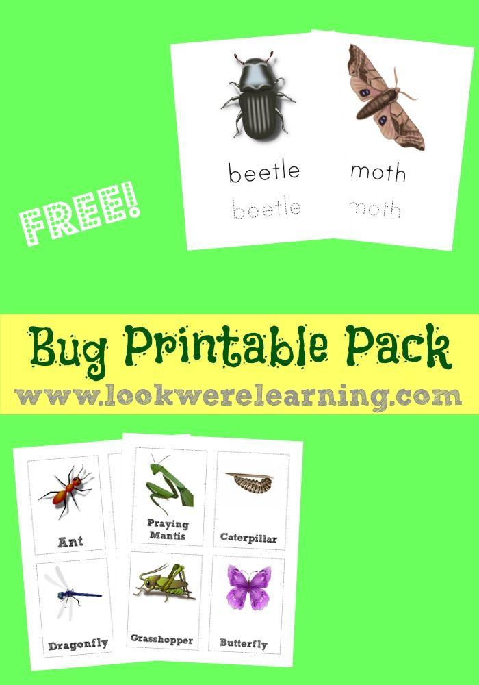 Free Bug Printables Pack ActivitiesScience ResourcesPreschool