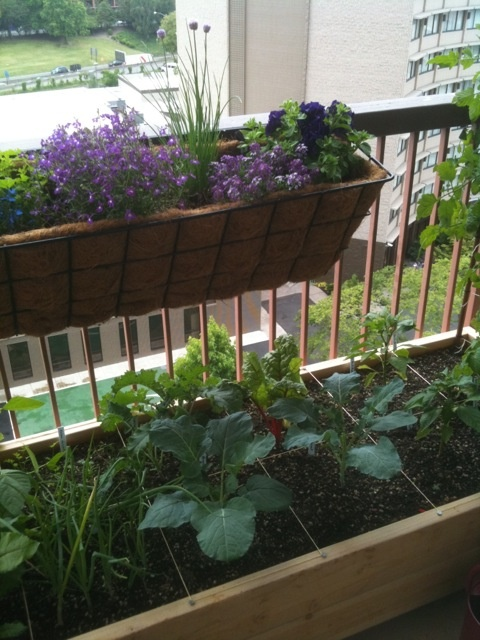 A 2 Wide Copper Trellis On The North End Of Bed Su Favorite Places Es Balco