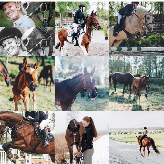 The new year has started and I'm ready for it!  . . . #bestnine2016 #bestnine #horseandotherness #instagood #lookslikefilm #nikond700 #nikonphotography #nikon #equine #equestrian #equinephotography #equestrianphotography #pferdeschoenheiten #youandyourhorse #bestofequines #featuremesophie #equinephoto #instahorse #horseofinstagram #horse #häst #hästfotograf #equinephotographer #horsephotographer #fotograf #photographerHorseandotherness
