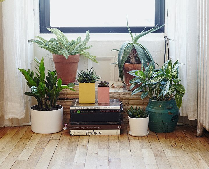 10 Tips To Keep Your Houseplants Happy (And Not Dead) - The Chalkboard