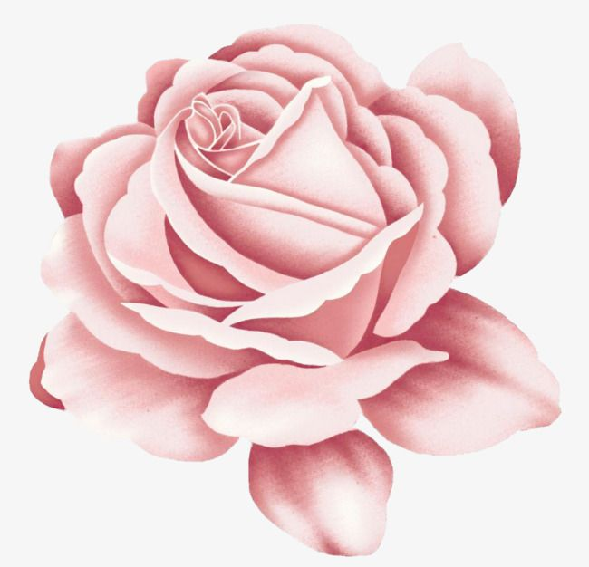 Rose Rose Clipart Flower Cartoon Flower Png Transparent Clipart Image And Psd File For Free Download Rose Clipart Pink Rose Tattoos Cartoon Flowers