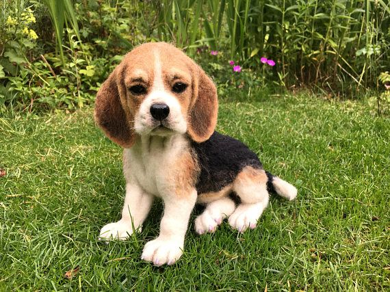 Very Realistic Needlefelted Toy Dog Beagle Bjd Blythe Doll With