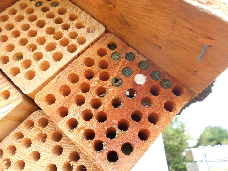 Make Your Own Little Bee Houses Bee House Bees And Gardens