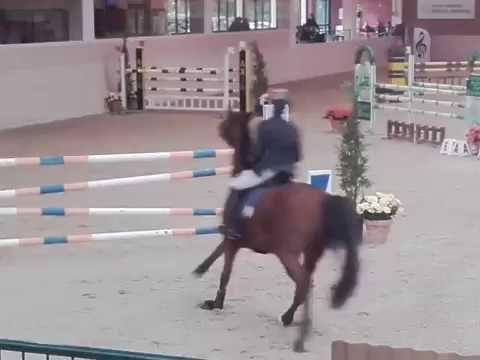 Euro Horse for Sale: Lexington E.H. 7 y.o. Gelding by Lordanos x Carry -...