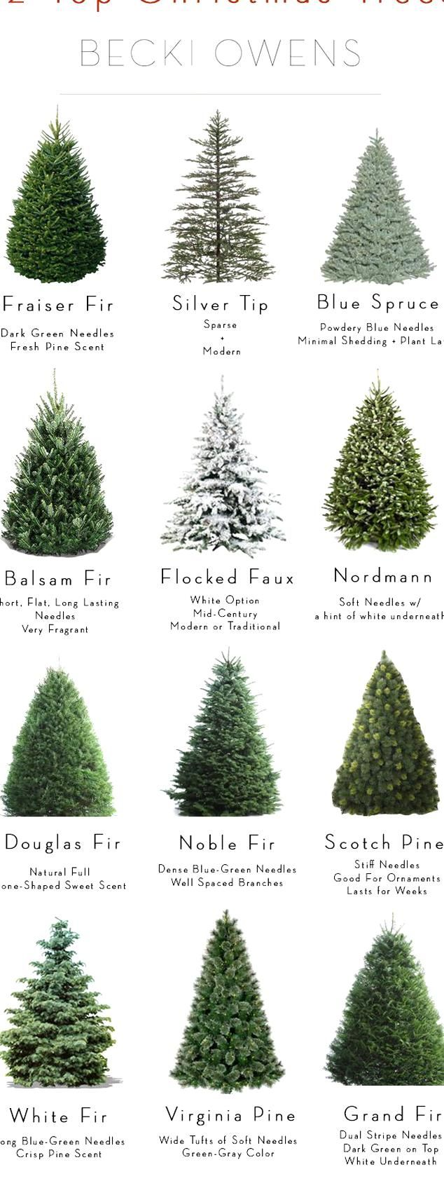 Were Making Christmas Tree Decorating Easy With Inspirations An Introduction To 12 Popular Va In 2020 Types Of Christmas Trees Real Christmas Tree Christmas Tree Guide