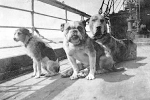 """DOGS OF THE TITANIC! """"The ship's cat, who was brought along to control vermin and had given birth to a litter of kittens, disembarked, carrying her babies one by one to the pier in England before the ship started its journey across the Atlantic. Some feel this was a mystic animal premonition, although it could just be chalked up to Mama Cat seeking a more secure future on land for her little ones. Either way, no known cat lives were lost."""""""