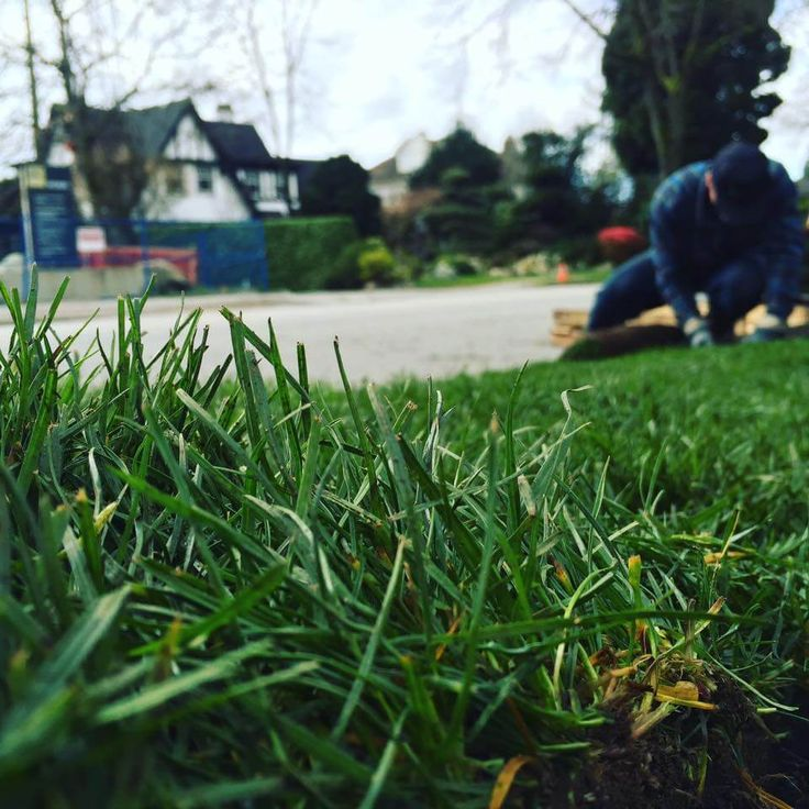 Professional or DIY Sod Installation? Which method is right for you? At Western Turf Farms we believe that any homeowner can Do-It-Yourself install a new sod lawn and do it well. As a turfgrass company that's been in the business of growing high-quality sod products for more than 50 years, we've seen our