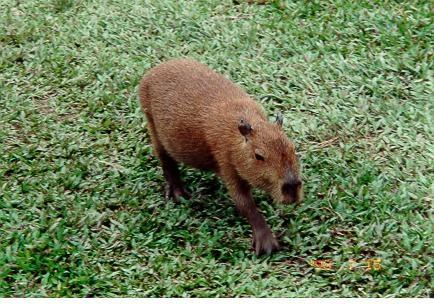 Rainforest animal | Rainforest pics | Pinterest ...