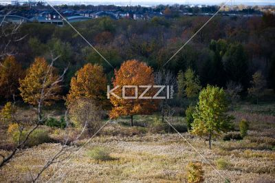 autumn trees. - Distant view of autumn trees.
