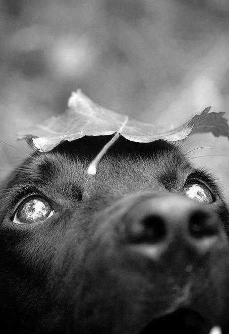 ♛olha o olhar que coisa mais linda