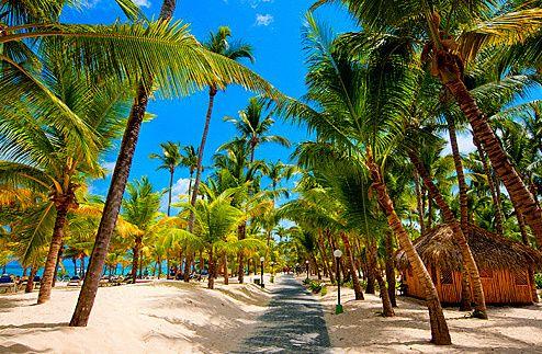 sand, sea and palm trees