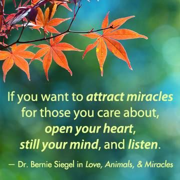 """If you want to attract miracles for those you care about, open your heart, still your mind, and listen"" — Dr. Bernie Siegel in his book LOVE, ANIMALS & MIRACLES. www.newworldlibrary.com"