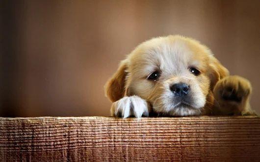 Ansia da separazione cane rimedi | Disturbi ansia da abbandono nel cane