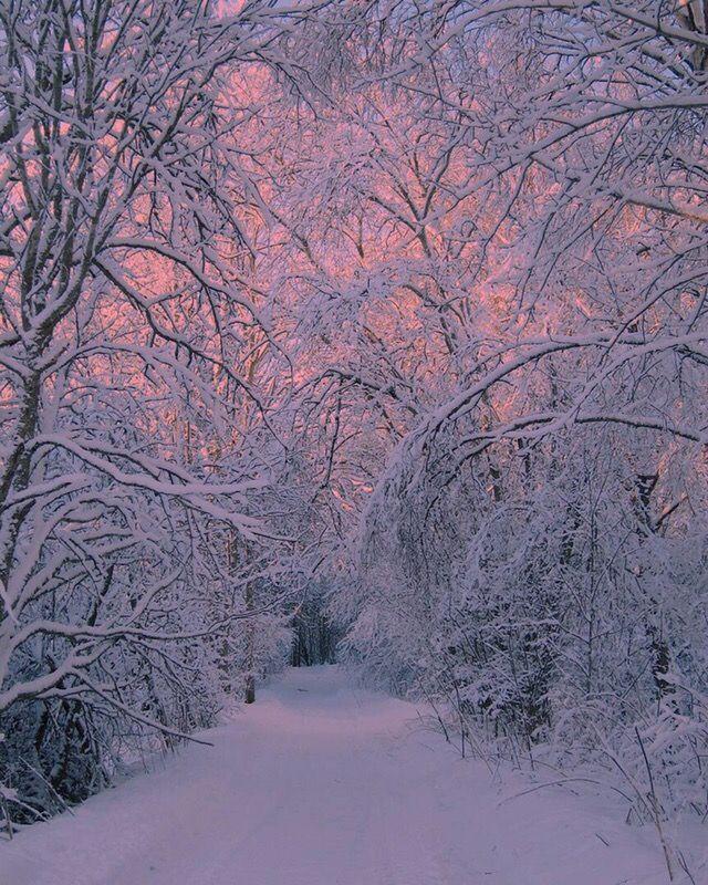 #Schnee #Winter #Wald #Natur   – Melancholy