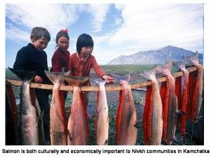 The traditional economy of the Nivkh people, as well as a large part of the regional economy in general, depends on salmon fisheries.   Nivkh_salmon