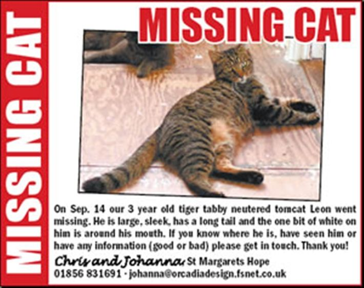 One Of The Biggest Tragedies Is Losing A Cat Cats Often Climb Out Of Open Windows Or Slip Out Doors Although Your Cat May B Losing A Pet Lost Cat Poster