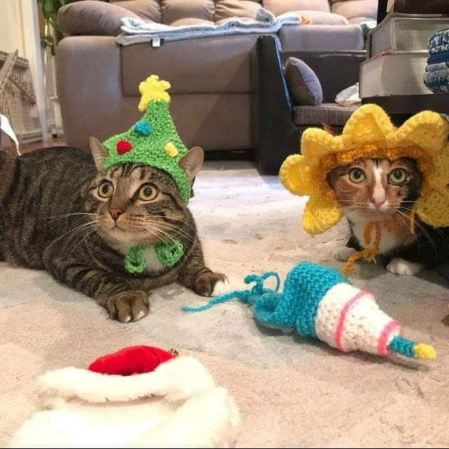 """<3 Customer photo from Judy: """"Best Xmas tree pet hat I've found - beautiful work as always! We've purchased several hats from this shop in the past for our cats (for birthday, Easter, Christmas, etc) and her hats are impressive - excellent quality, perfect fit, and hats stand up well in pet pictures that our friends and family love. Thank you and we'll definitely buy more hats for Valentine's and other holidays! :-)"""""""