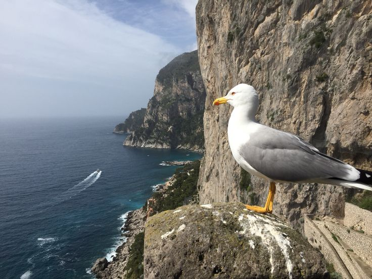 """I'm the most lucky sea-gull! View to Marina Piccola in Capri from the """"Gardens of Augustus"""""""
