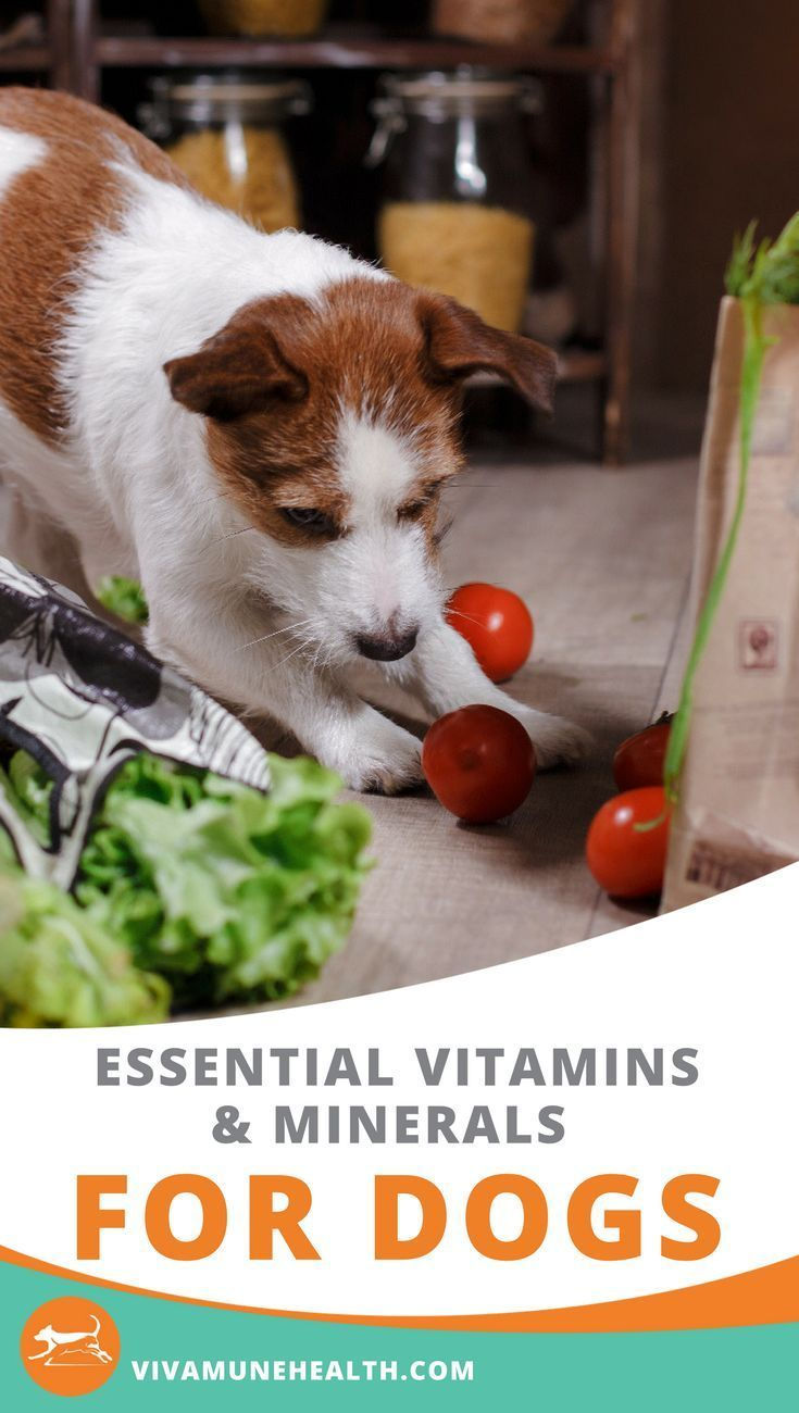 Essential vitamins and minerals for dogs animal