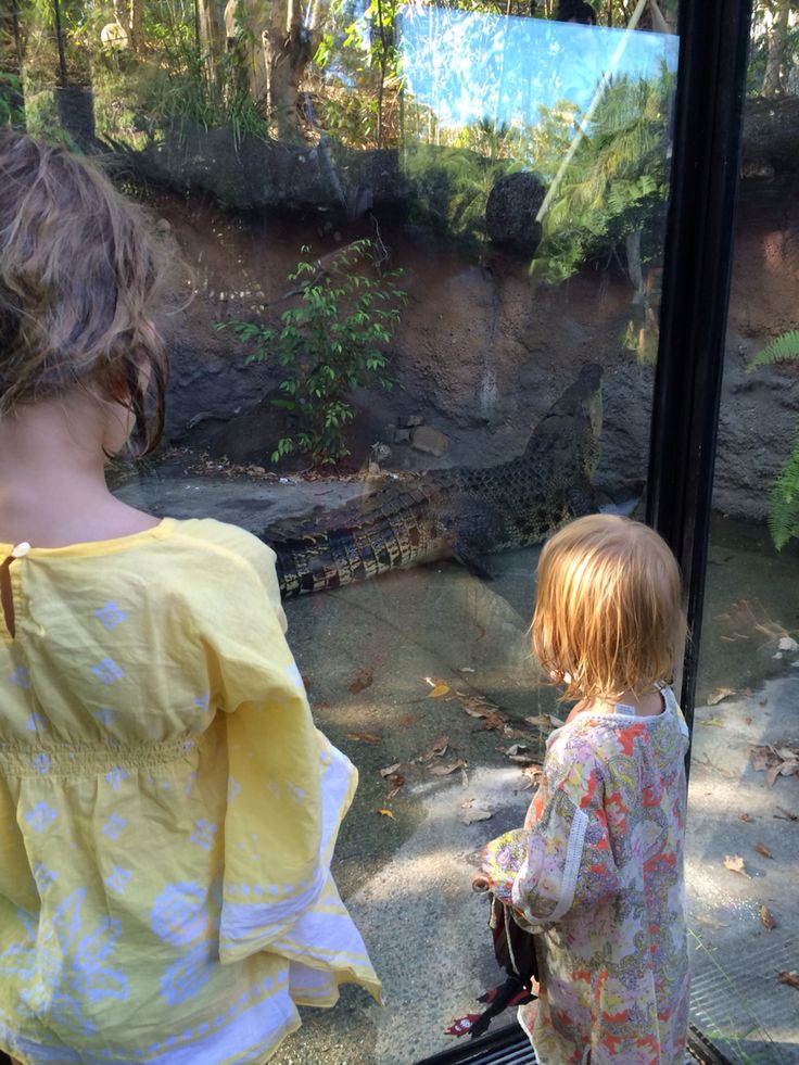 Find interesting and unique experiences for the kids #australianwildlife #crocodiles #hamiltonisland