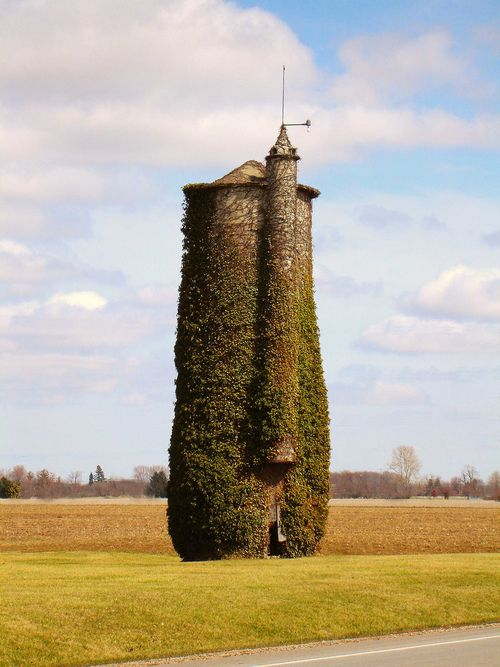 Ivy covered silo, Fremont, OH (by Equinox27 on Flickr).