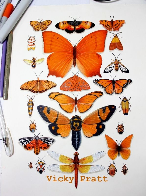 """By Vicky Pratt. Copic markers and colour pencil.  """"Orange Insect Collection"""" www.vicpratt.wix.com/vickypratt Find me on FB and IG Vicky Pratt - Illustrator."""