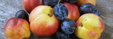 Image result for wild plum healthy living