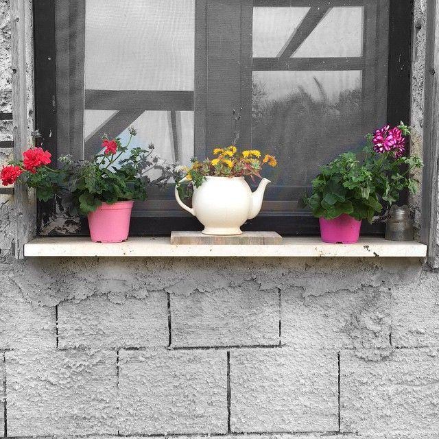 #primavera #fiori  #biancoenero #colori #campagna #spring #flowers #blackandwhite #colors #country #25aprile #ig_sicilia #igerssicilia #ig_italia #igersitalia #canicattì