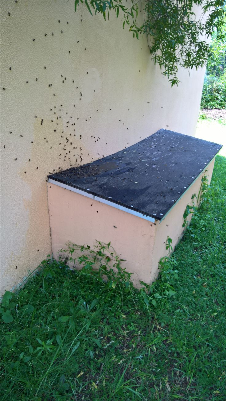 Bee removal in Johannesburg bees removed in geyser Box in Midrand