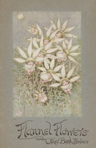 Flannel Flowers and Other Bush Babies