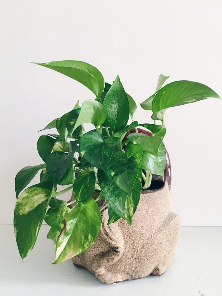 5 low maintenance air purifying plants for Low maintenance air purifying plants