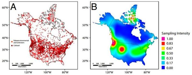 Recently, a group of scientists analyzed data recorded in the Canadian Archaeological Radiocarbon Database (CARD), which aggregates 35,905 radiocarbon samples from archaeological sites across the North American continent.   By applying a kernel density estimation method to the data, the researchers produced the first maps of temporally distinct palaeo-demographic trends that correspond well to existing evidence of human expansion across North America in the Holocene.