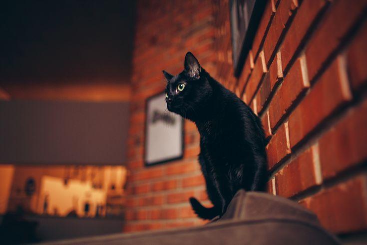 Ultra 4k image cat Wallpaper – Trending Best Wallpaper 2019