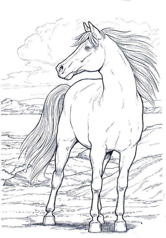 Cavallo 11 Disegni Da Colorare Per Adulti Disegno Di Cavallo Disegni Da Colorare Disegni Di Cavalli