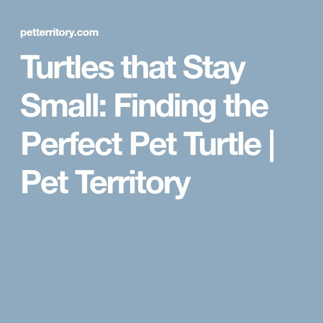 Turtles that Stay Small: Finding the Perfect Pet Turtle | Pet Territory