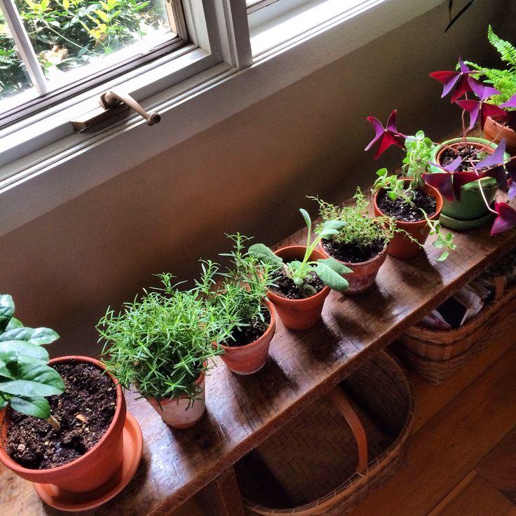 Kitchen Bench Herb Garden: 102 Best Kitchen Herb Garden Images On Pinterest