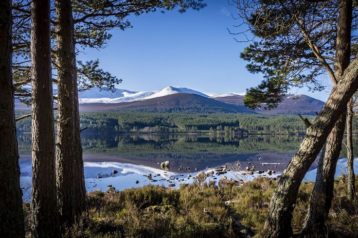View of snow-capped Cairngorm mountains reflected in water, framed by pine trees