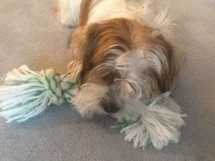 one of two rope toys for Benji to chew